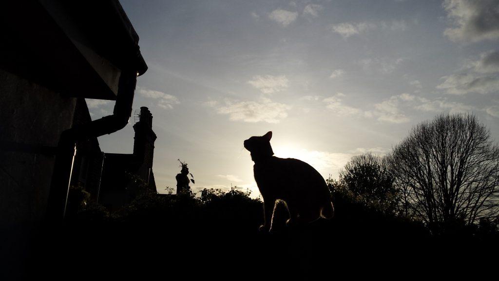 Mimbles Cat Silhouette